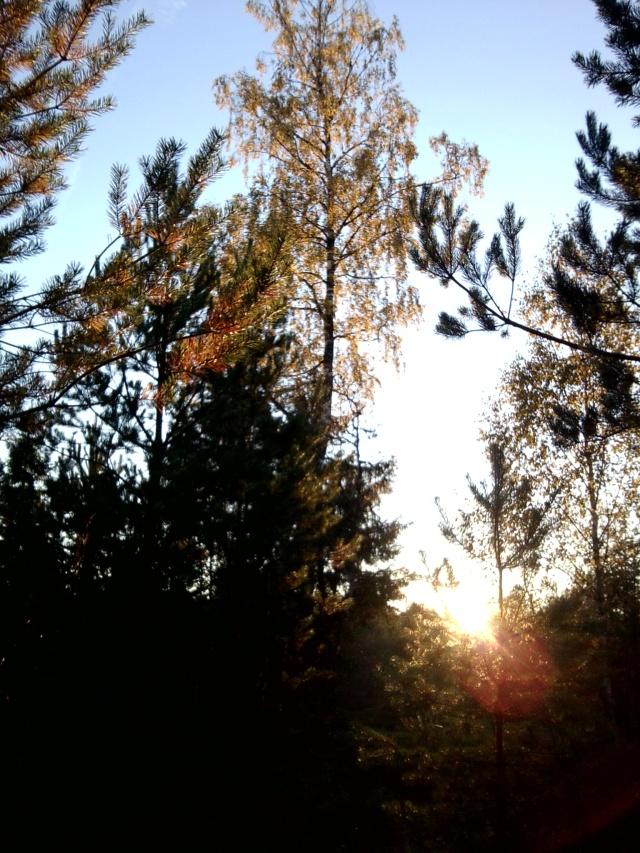 Höst - och skogsbilder 2013 010