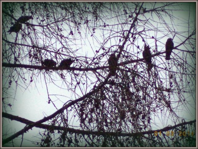 De har det mysigt där de sitter på  en rad på trädets gren!