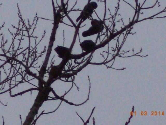 Fina fåglar, som skuggor avtecknade mot himlen.