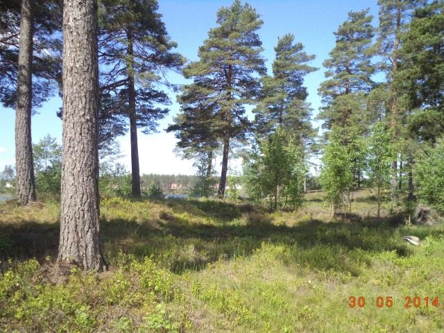 Skog. Vackra gröna träd och mjuk mossa.