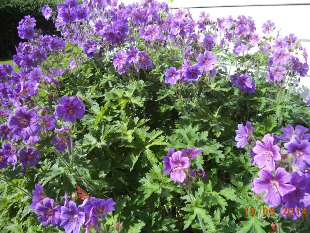 Vackert med lila!