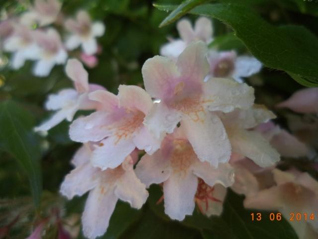 Vackra rosa blommor...