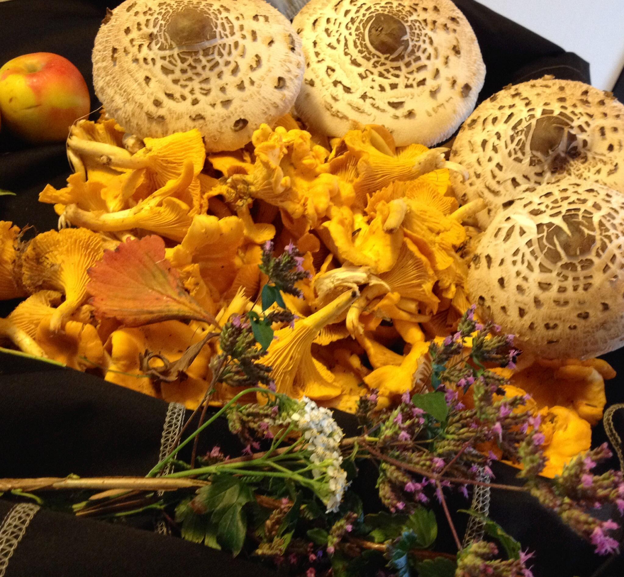 Ett höststillében med svampar som vi själva hittade och plockade!