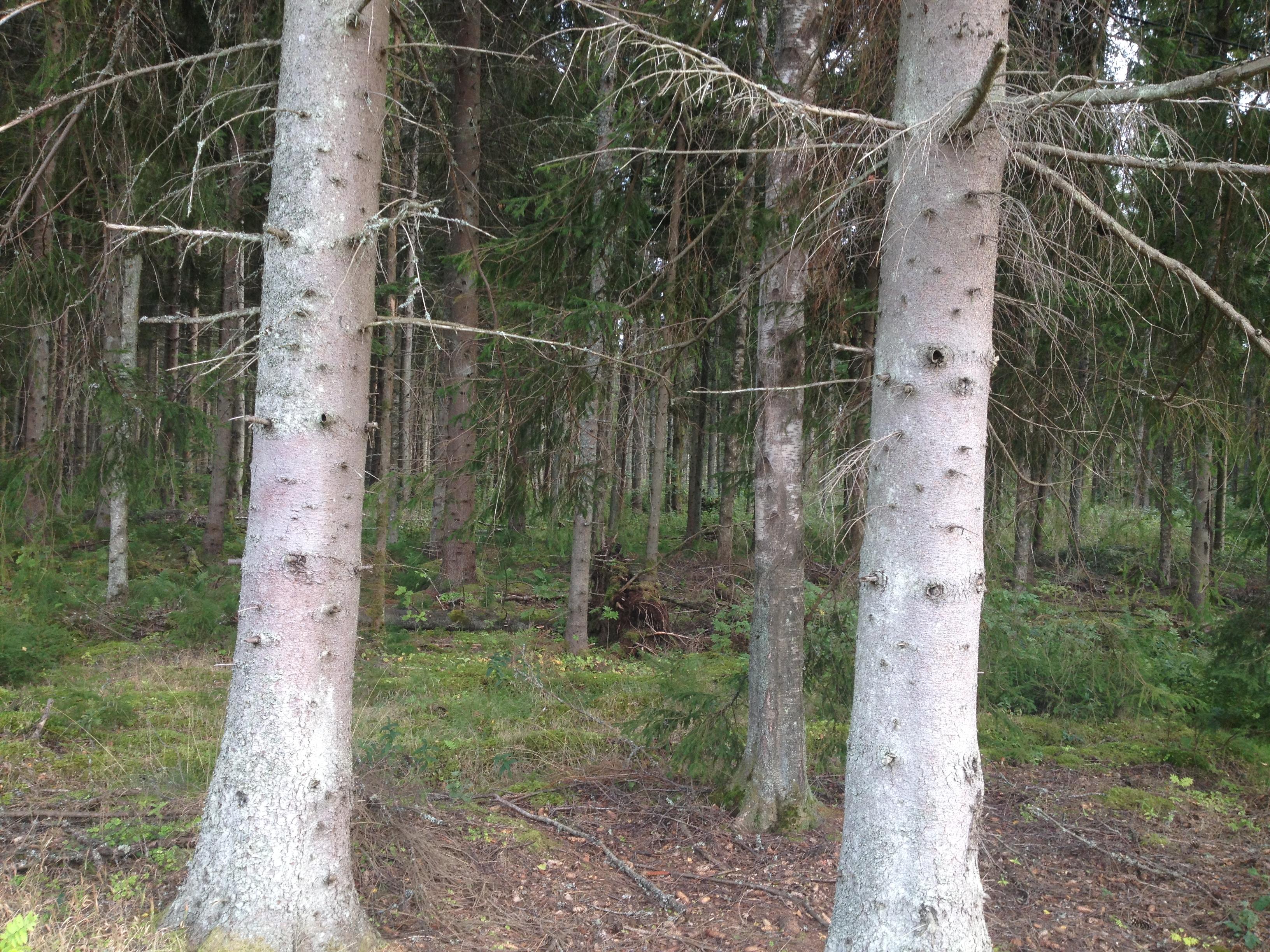 Livet flyter på, men ibland ser man inte skogen för alla träd...  Man måste se det viktiga i livet...