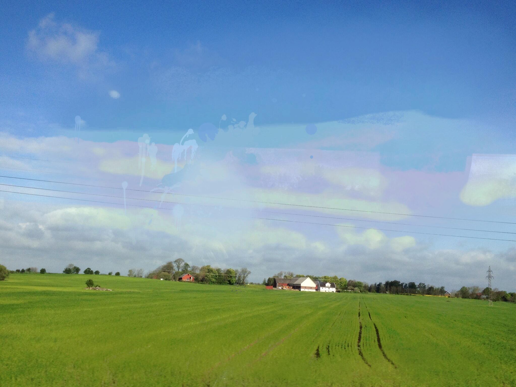 Grön åker blå himmel