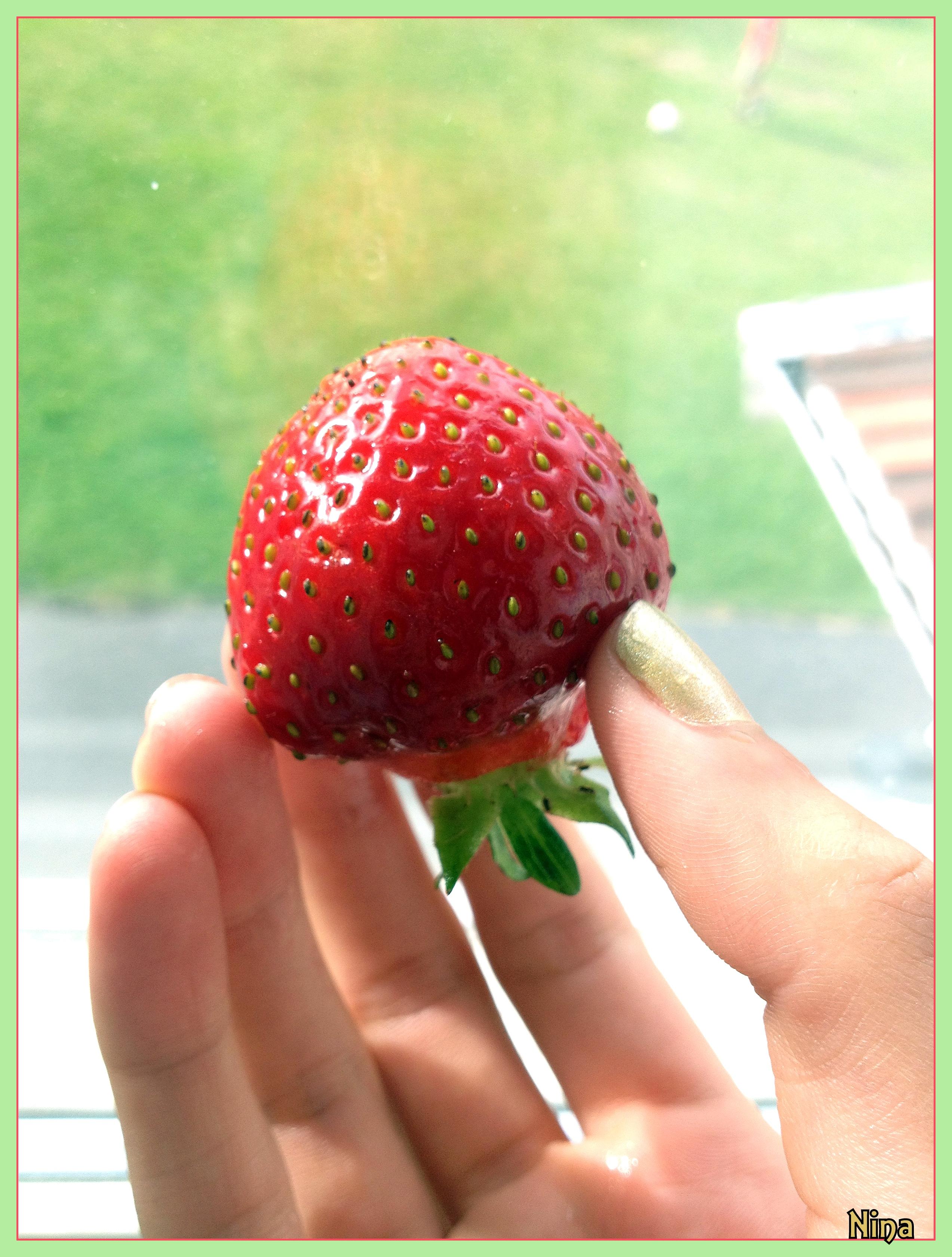 Somrig jordgubbe