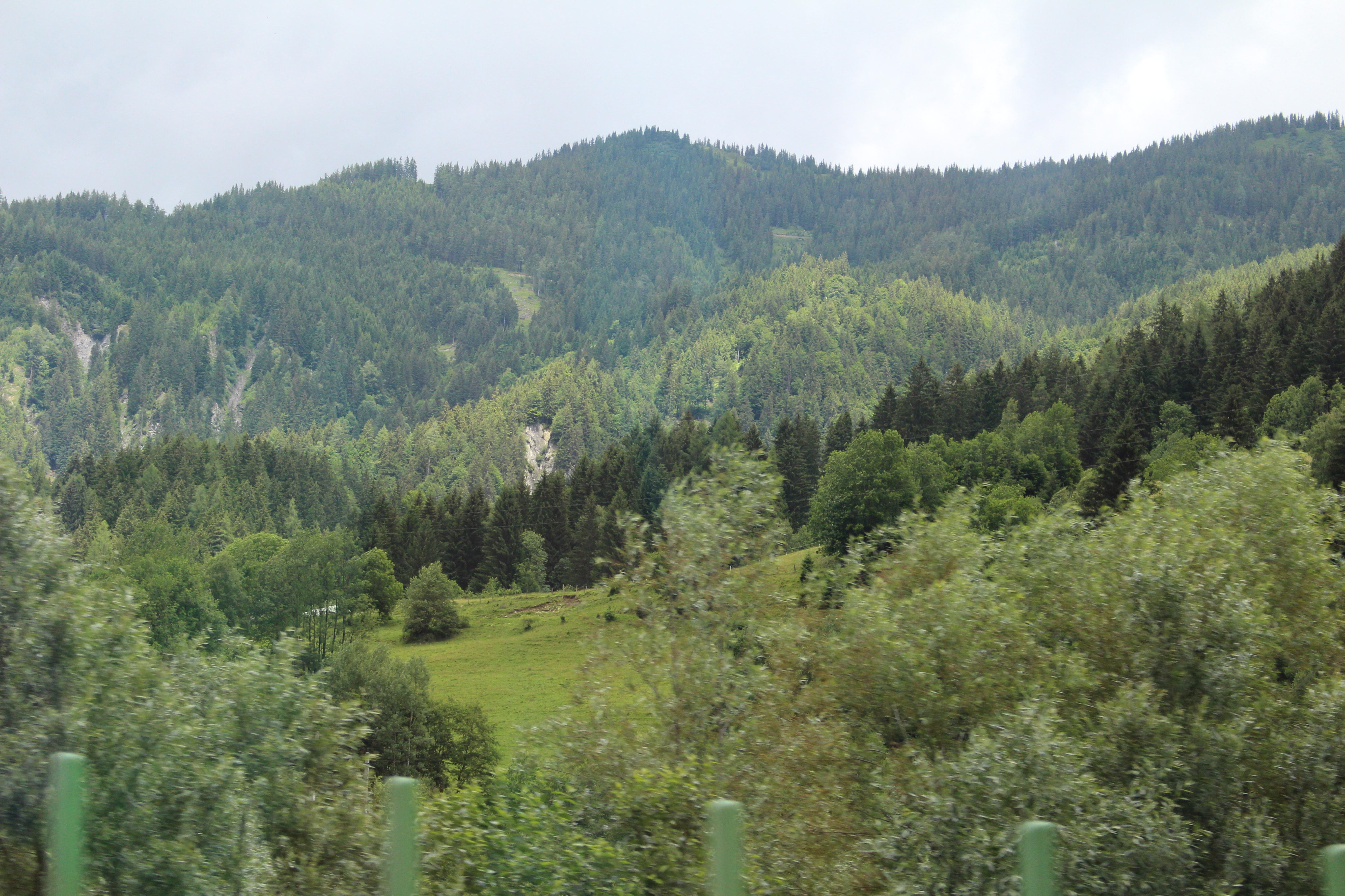 Österrrikes karaktäristiska skogsklädda berg.